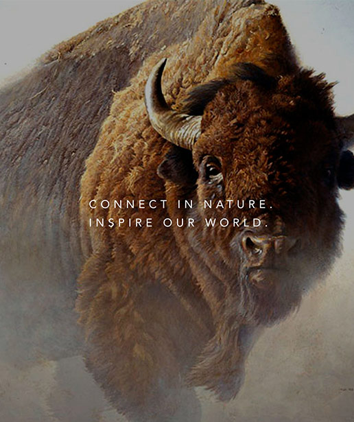 """A buffalo with the Bateman Foundation tagline, """"Connect in nature. Inspire our world."""" over top."""