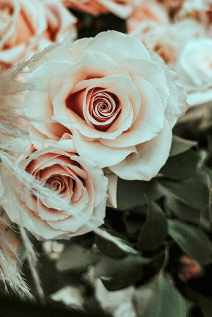 A bouquet of pink roses.