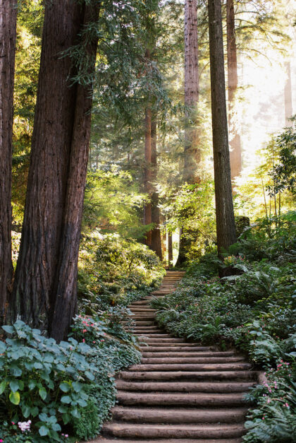 A staircase leads into an enchanting forest at Nestldown